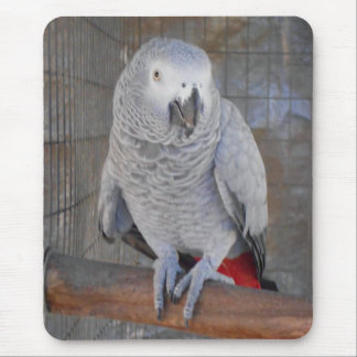 """African Grey """"Rudy"""" Mouse Pad"""