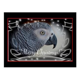 African Grey Snowy Christmas Postcard