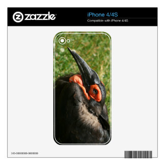 African Ground Hornbill iPhone 4/4S Skin