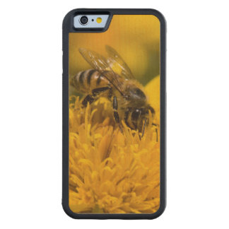 African Honey Bee With Pollen Sacs Feeding Carved Maple iPhone 6 Bumper Case