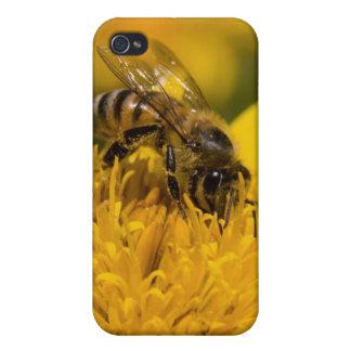 African Honey Bee With Pollen Sacs Feeding iPhone 4/4S Case