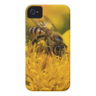 African Honey Bee With Pollen Sacs Feeding iPhone 4 Cover