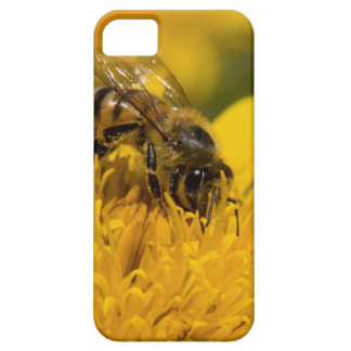African Honey Bee With Pollen Sacs Feeding iPhone SE/5/5s Case