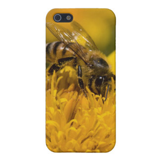 African Honey Bee With Pollen Sacs Feeding iPhone SE/5/5s Cover