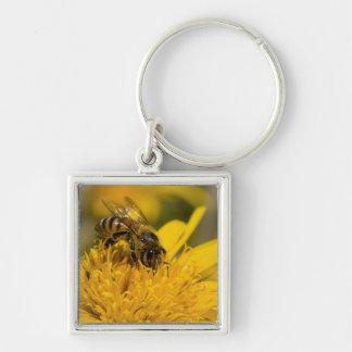 African Honey Bee With Pollen Sacs Feeding Keychain