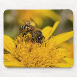African Honey Bee With Pollen Sacs Feeding Mouse Pad