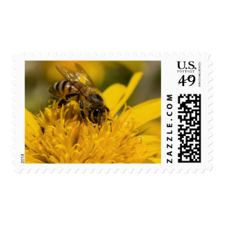 African Honey Bee With Pollen Sacs Feeding Postage