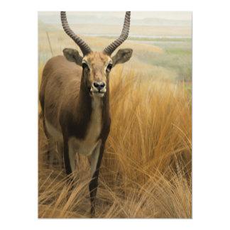 "African Impala 6.5"" X 8.75"" Invitation Card"
