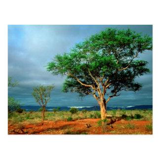 African Landscape Kruger National Park Postcard