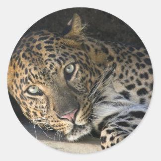 African Leopard Classic Round Sticker