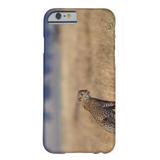 African leopard in grasslands , Kenya , Africa Barely There iPhone 6 Case