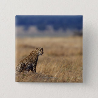 African leopard in grasslands , Kenya , Africa Pinback Button