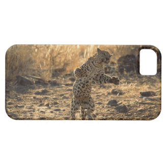 African leopard on hind legs , Namibia , Africa iPhone SE/5/5s Case