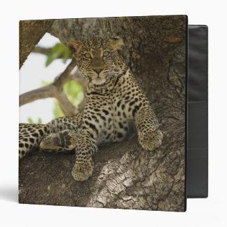 African Leopard, Panthera pardus, in a tree in Vinyl Binder