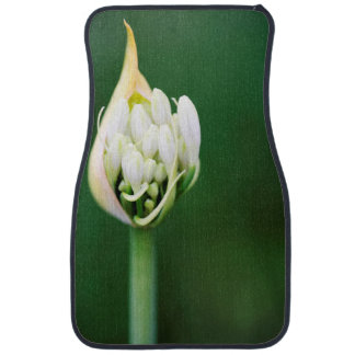 African Lily, Agapanthus Praecox, Cape Town Car Floor Mat
