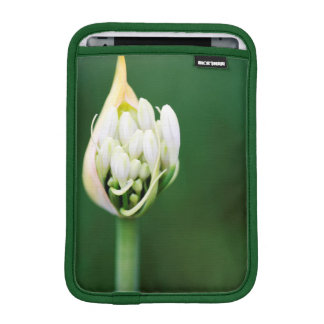 African Lily, Agapanthus Praecox, Cape Town iPad Mini Sleeve