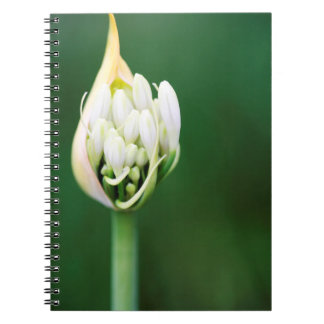 African Lily, Agapanthus Praecox, Cape Town Spiral Note Books