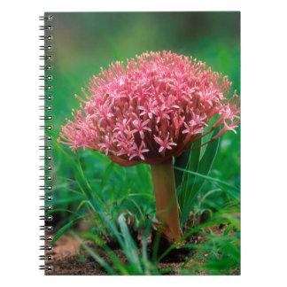 African Lily (Agapanthus Praecox), Mala Mala Note Book