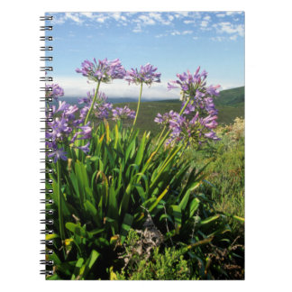 African Lily (Agapanthus praecox), Mossel Bay Spiral Notebook