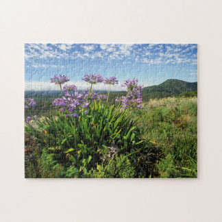 African Lily (Agapanthus praecox), Mossel Bay Puzzle