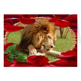 african-lion-00069-65x45 card
