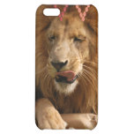 african-lion-00551