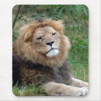 african lion 10 mouse pad