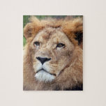 african lion 11 puzzles