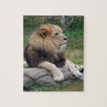 african lion 14 jigsaw puzzles