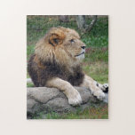 african lion 14 puzzle