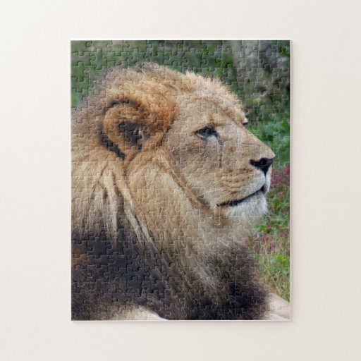 african lion 15 jigsaw puzzles