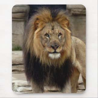 african lion 16 mouse pad