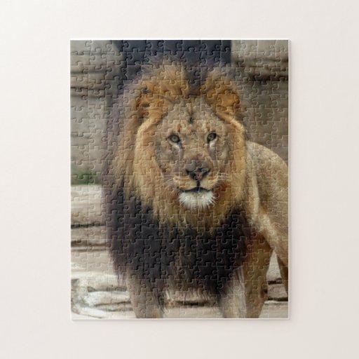 african lion 16 puzzle