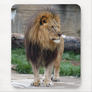 african lion 18 mouse pad