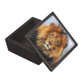 African Lion 1 Jewelry Box