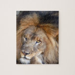 african lion 20 puzzles