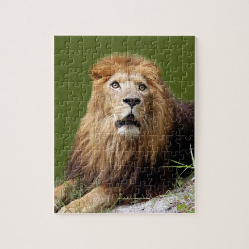 african lion 21 puzzles