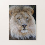 african lion 27 jigsaw puzzle