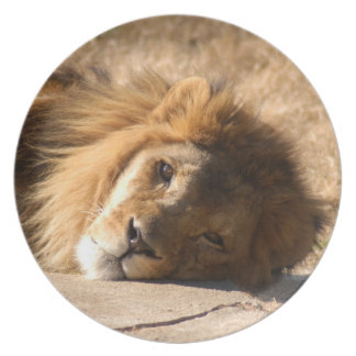 African Lion-7136--11x11 Melamine Plate