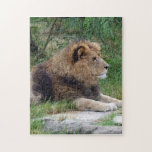 african lion 9 jigsaw puzzles