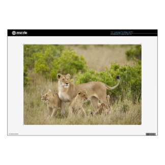 African Lion adult female with cubs, alert Laptop Skins
