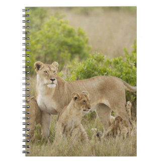 African Lion adult female with cubs, alert Notebook