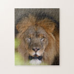 african-lion-b-1 jigsaw puzzle