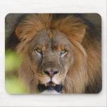 african-lion-b-1 tapete de raton