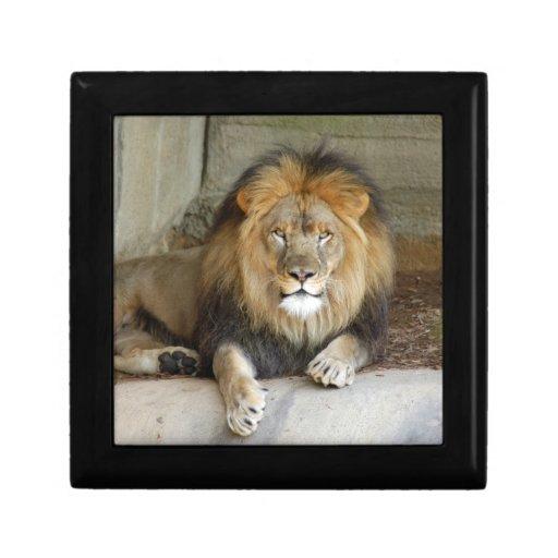 african-lion-b-2 cajas de joyas