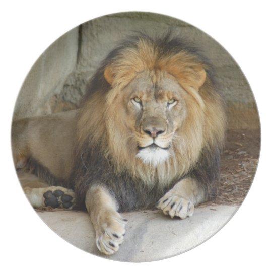 african-lion-b-2 dinner plate
