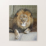 african-lion-b-2 jigsaw puzzle