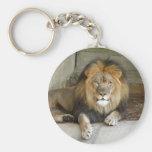 african-lion-b-2 keychain