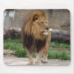 african-lion-b-3 tapetes de ratones