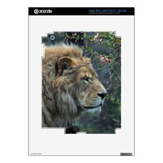 African Lion Big Cat Wildlife-lovers Art Skin For iPad 3